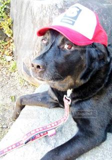 犬の写真・画像素材[558969]