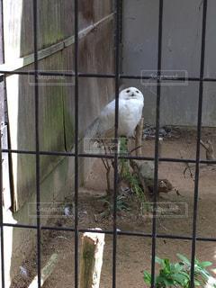 鳥の写真・画像素材[347571]
