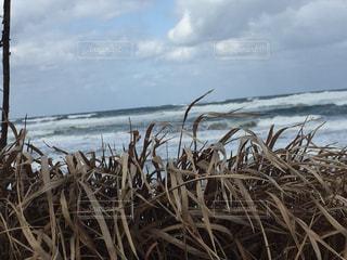 海の写真・画像素材[349518]