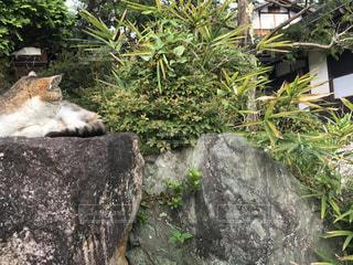 猫の写真・画像素材[347966]