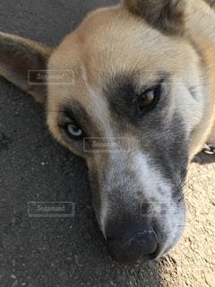犬の写真・画像素材[358988]