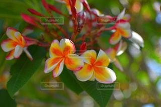 お花❤の写真・画像素材[1330187]