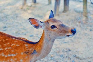 近くに動物のアップの写真・画像素材[1565672]