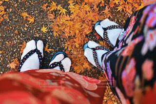 秋の写真・画像素材[1661725]