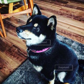 犬の写真・画像素材[349257]