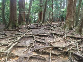 木の写真・画像素材[349270]