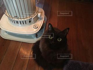 猫とストーブの写真・画像素材[353933]