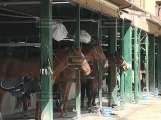 馬の写真・画像素材[359565]