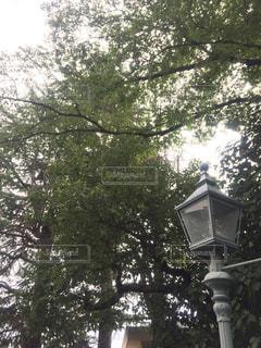 木の写真・画像素材[360842]