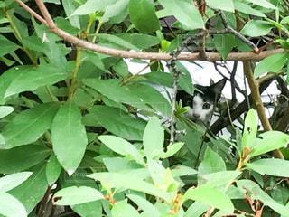 木の間から覗く猫 - No.748484
