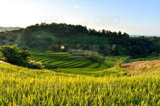 緑豊かな畑のクローズアップの写真・画像素材[2825597]