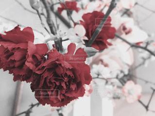 花の写真・画像素材[348326]