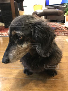 犬の写真・画像素材[348352]