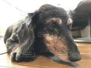 犬の写真・画像素材[690765]