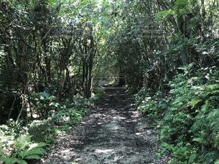 森林の写真・画像素材[690785]