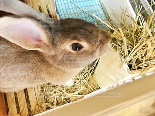 仔ウサギの食事の写真・画像素材[2148743]