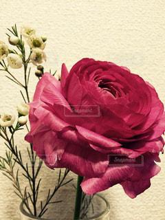 花の写真・画像素材[348667]