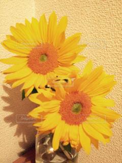 花の写真・画像素材[348705]