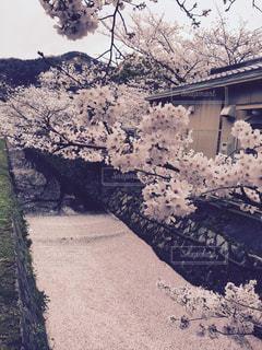 春の写真・画像素材[348738]