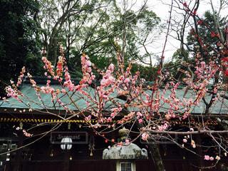 春 - No.348741