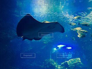 魚の写真・画像素材[348775]