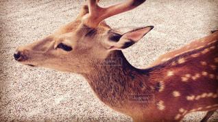 動物の写真・画像素材[348780]