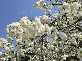 花の写真・画像素材[576448]