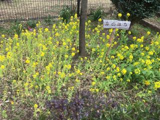 花の写真・画像素材[356684]