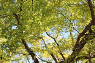 木のクローズアップの写真・画像素材[2104892]