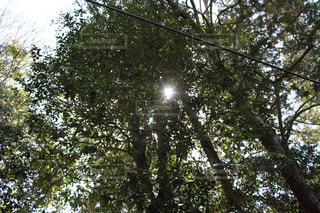 森の木の写真・画像素材[2104903]