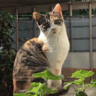猫の写真・画像素材[359802]
