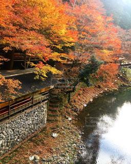 秋の写真・画像素材[348842]