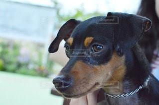 犬の写真・画像素材[11142]