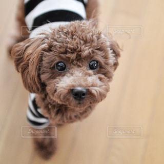 犬の写真・画像素材[270874]