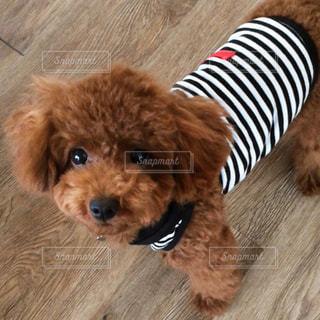 犬の写真・画像素材[534136]