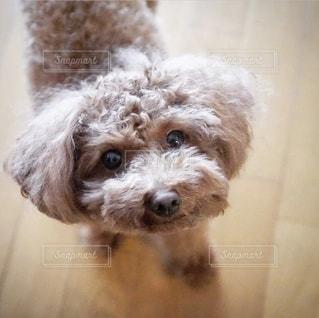 可愛い犬の写真・画像素材[2644068]