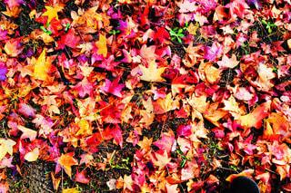 秋の写真・画像素材[348889]