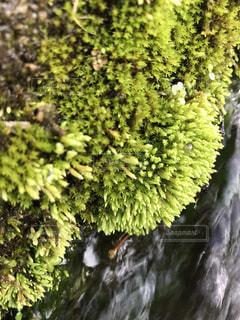 緑の葉に囲まれた滝 - No.707442