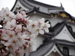 滋賀にある琵琶湖です。の写真・画像素材[1126686]