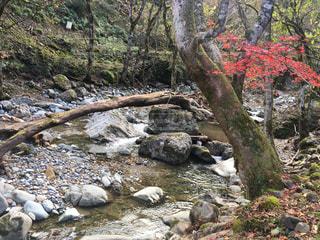 近くの木の横にある岩をの写真・画像素材[896121]