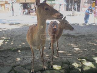 動物の写真・画像素材[352569]