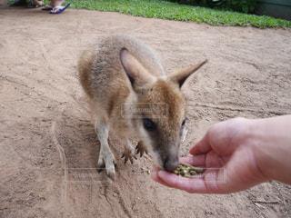 動物の写真・画像素材[354306]