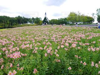花の写真・画像素材[355644]