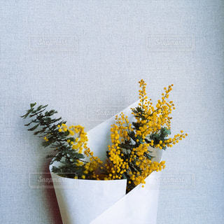 花の写真・画像素材[349499]