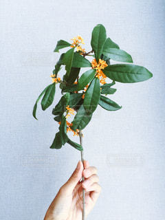 花の写真・画像素材[349515]