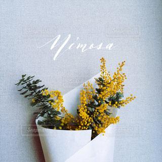 花の写真・画像素材[351860]