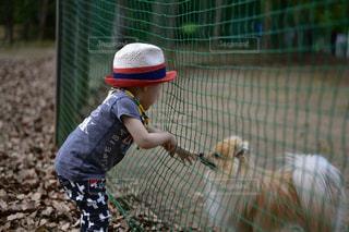 ポメラニアン ドッグラン 犬の写真・画像素材[353704]