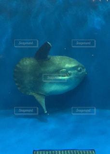 No.355277 魚