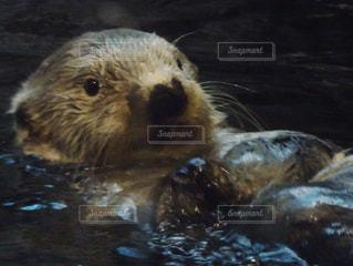 水族館の写真・画像素材[349314]
