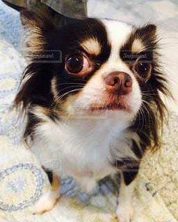 犬の写真・画像素材[349333]